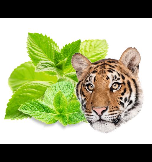 Sauna-Duftkonzentrat Tigerminze