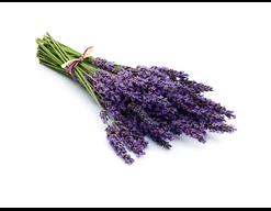 Sauna-Duftkonzentrat Lavendel