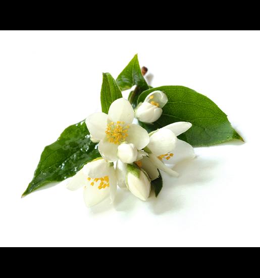 Sauna-Duftkonzentrat Jasminblüte